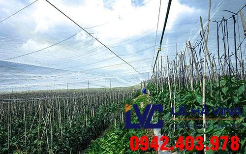 Lưới chống côn trùng giá rẻ, Lưới chống côn trùng, Lưới chống côn trùng trong nông nghiệp, Lưới nhựa, Lưới chịu lực