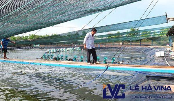 Lưới che nắng, Hướng dẫn cách lắp đặt lưới, Công ty Lê Hà Vina, Lưới Thái Lan