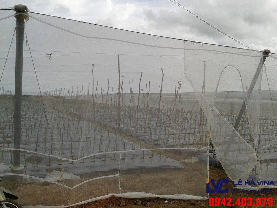 Lưới chống côn trùng, Lê Hà Vina, Lưới, Cách lắp đặt lưới an toàn, Lưới che chắn côn trùng