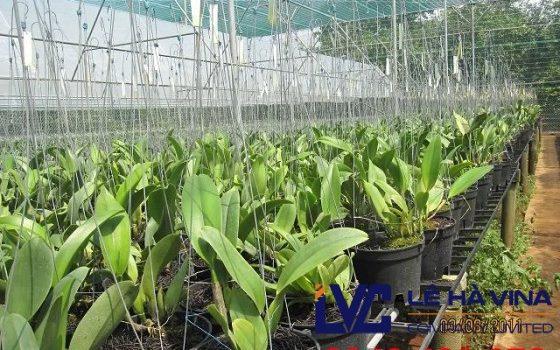 Lưới che nắng cho lan, Lưới che nắng, Giá lưới che nắng, Lưới nhựa, Lưới che nắng trồng lan