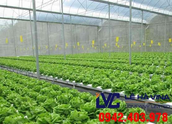 Lưới che mưa cho rau, Lê Hà Vina, Lưới che mưa trồng rau, Lưới che mưa, Lưới che vườn ươm