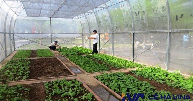 Lưới che nắng trồng rau, Lê Hà Vina, Lưới che nắng, Lưới che nắng Thái Lan, Công ty Lê Hà Vina