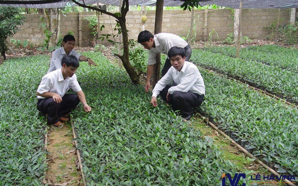 Lưới chống nắng vườn ươm, Lê Hà Vina, Cung cấp lưới trồng rau giá rẻ, Lưới chống nắng, Lê Hà Vina