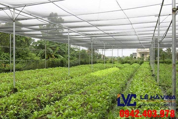 mua lưới trồng rau ở đâu, Lưới trồng rau, Mua lưới trồng rau, Lê Hà Vina, Bán lưới trồng rau sạch