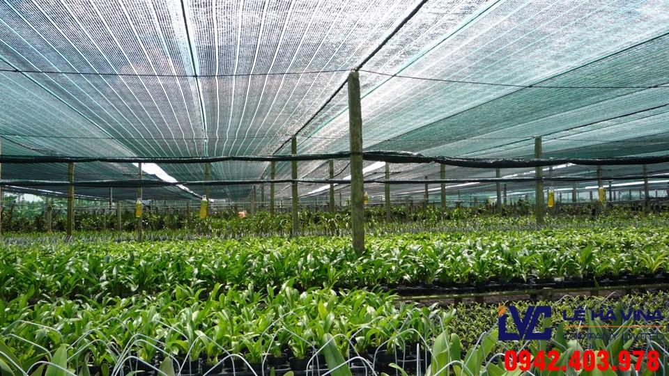 Lưới lan che nắng, Lê Hà Vina, Mua lưới lan ở đâu, Lưới làm giàn lan, Lưới lan