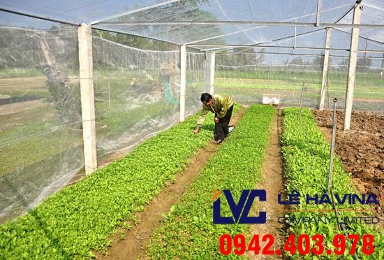 Mua lưới trồng rau, Lưới trồng rau, Công ty Lê Hà Vina, Bán lưới trồng rau sạch, Lưới chắn côn trùng, Lưới chống nắng vườn ươm