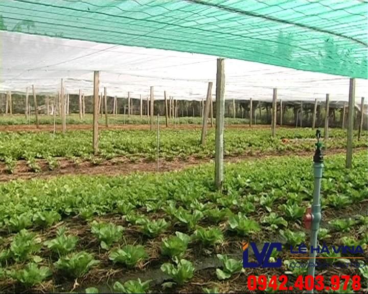 Mua lưới trồng rau, Lưới trồng rau, Lê Hà Vina, Địa chỉ cung cấp lưới giá rẻ, Lưới