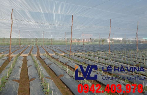 Lưới chống côn trùng, Lê Hà Vina, Lưới Thái Lan, Mô hình trồng rau thủy canh