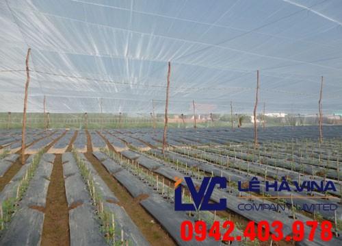 Giá lưới làm nhà lưới, Lê Hà Vina, Giá lưới, Mô hình nhà lưới