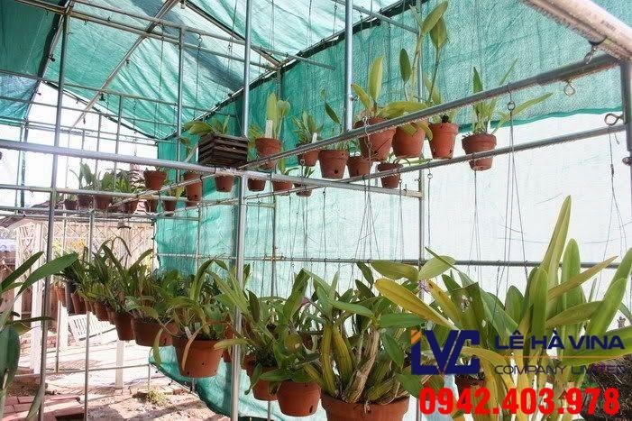 Lưới trồng rau sạch, Lưới trồng rau, Lê Hà Vina, Lưới