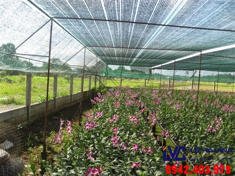 Lưới che nắng cho lan, Mua lưới che nắng, Lê Hà Vina, Địa chỉ cung cấp lưới che nắng, Lưới