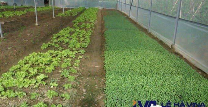 Lưới trồng rau, Lê Hà Vina, Lưới, Công ty Lê Hà Vina