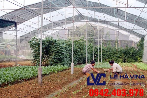Mua lưới trồng rau, Lưới trồng rau, Lê Hà Vina, Lưới trồng rau tại Lê Hà Vina, Mua lưới trồng rau ở đâu giá rẻ