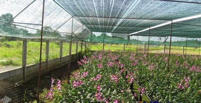 Lưới che lan Đài Loan, Lưới che nắng của Đài Loan, Lưới che nắng, Lưới, Lê Hà Vina, Lưới che lan