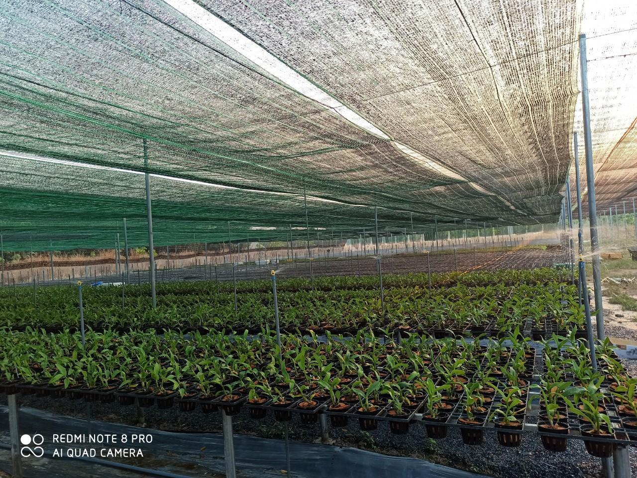 Lưới che nắng hoa hướng dương, Lưới che chắn côn trùng, Mua lưới che nắng, Lê Hà Vina, lưới che nắng nhãn hiệu Hoa Hướng Dương